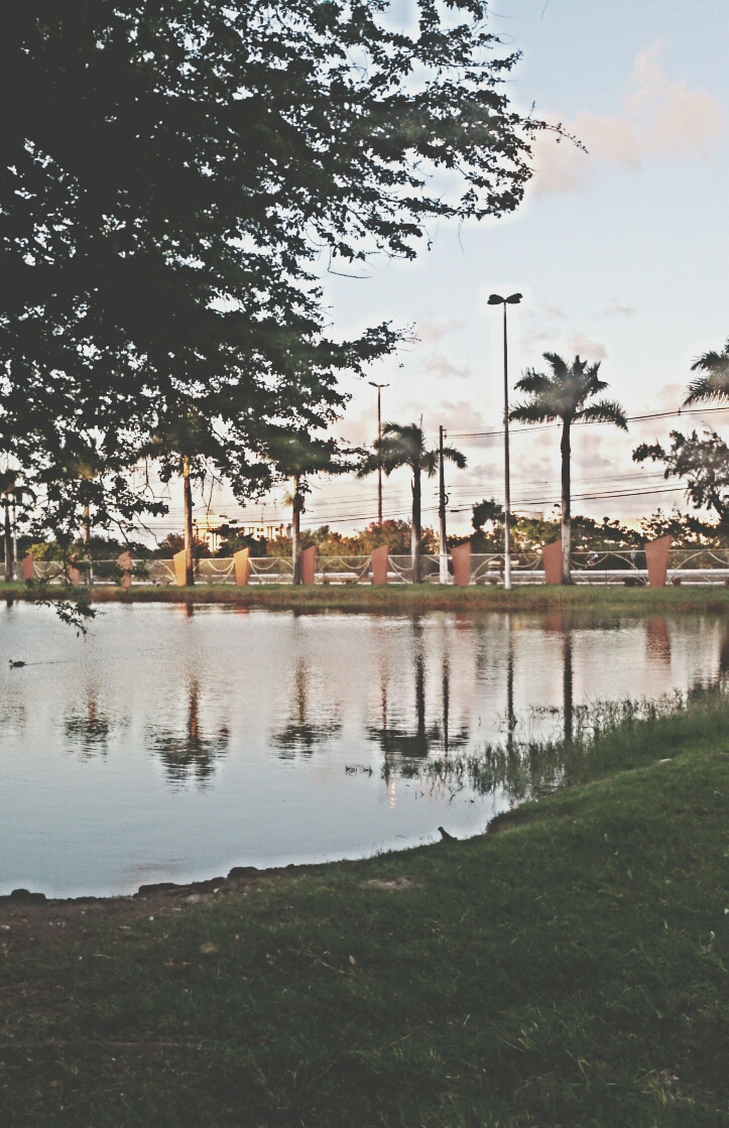 tree, water, sky, built structure, architecture, building exterior, lake, river, tranquility, reflection, nature, grass, branch, city, tranquil scene, growth, park - man made space, outdoors, scenics, beauty in nature