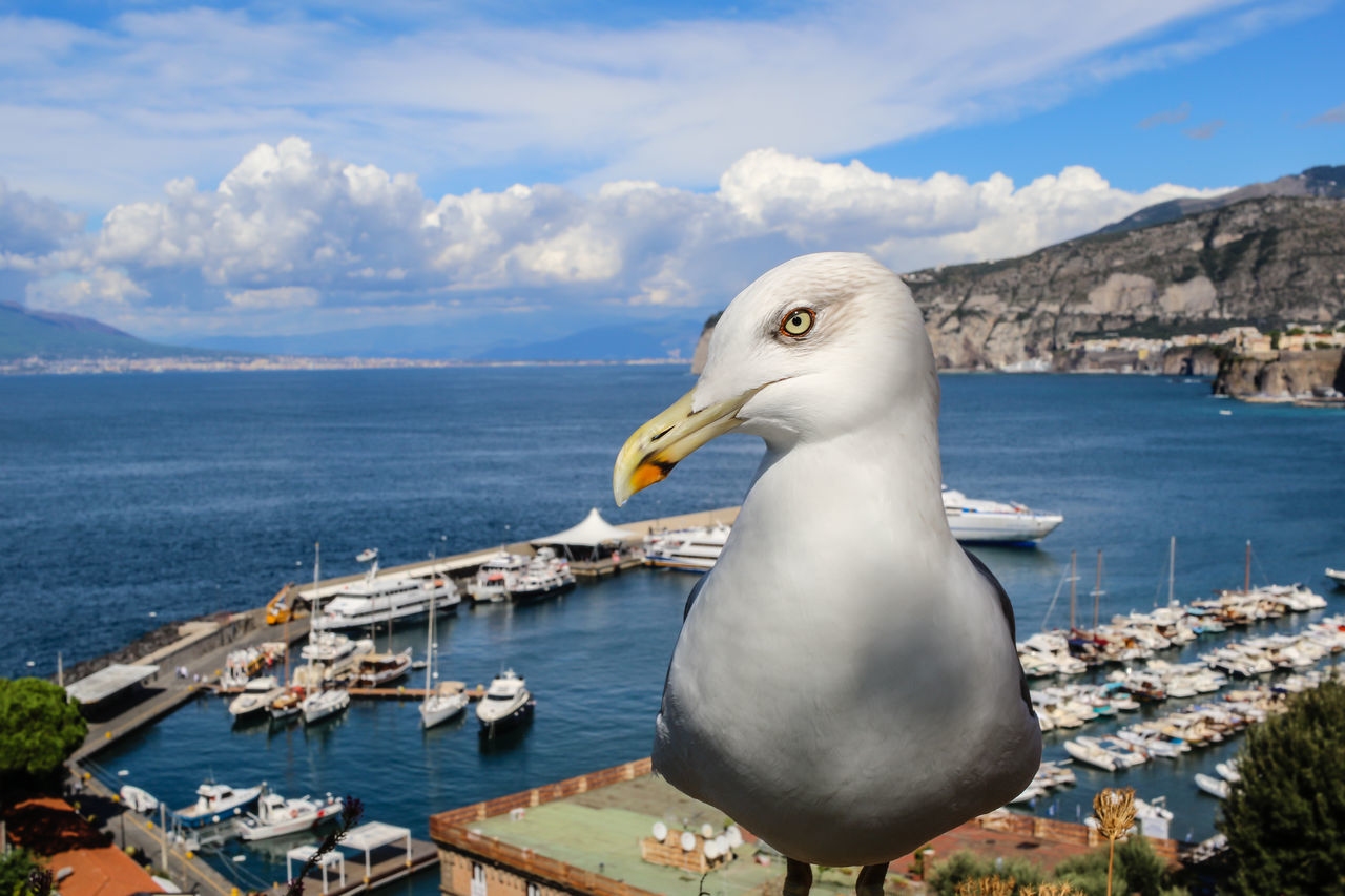 Photobombing Seagull Animal Themes Animals In The Wild Beak Beauty In Nature Bird Cover Shot Covershot FUNNY ANIMALS Gull Ocean Photobomb Photobombed Photobombing Seagull Port Sea Seagull Sky Sorrento Vacation Water Bird Wildlife Zoology