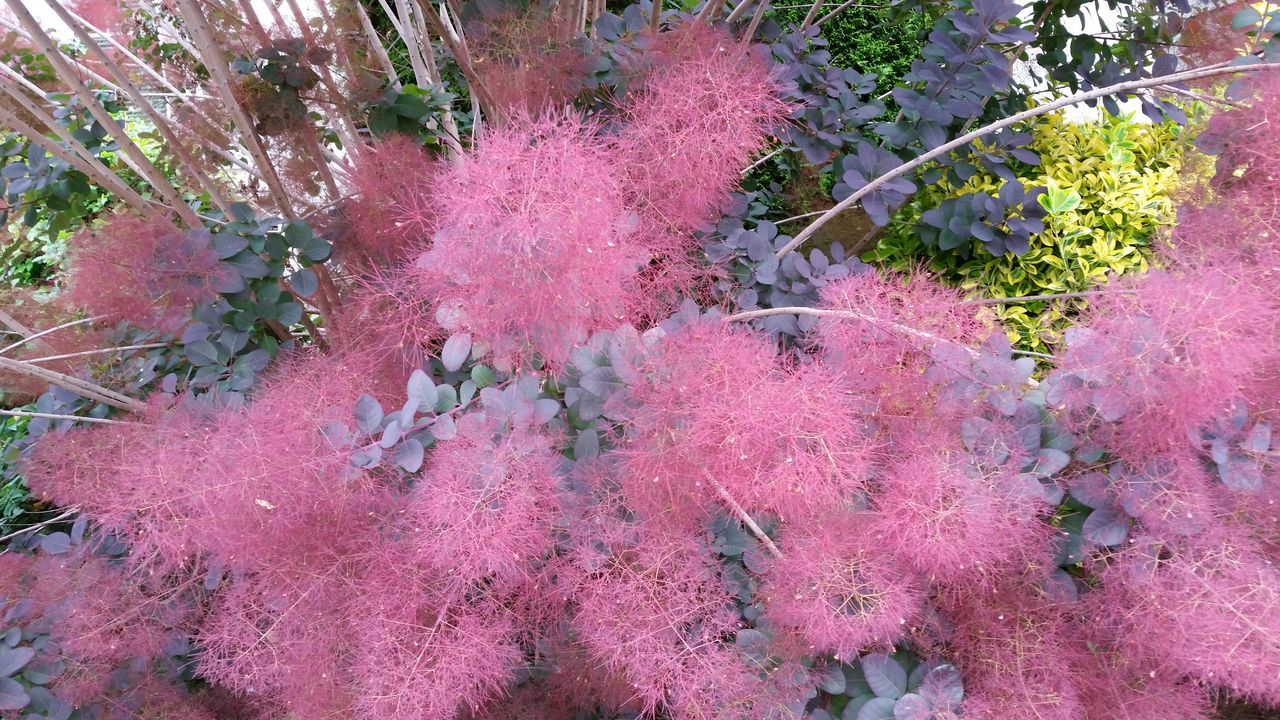growth, plant, high angle view, pink color, nature, no people, tree, beauty in nature, day, outdoors, leaf, flower, fragility, close-up