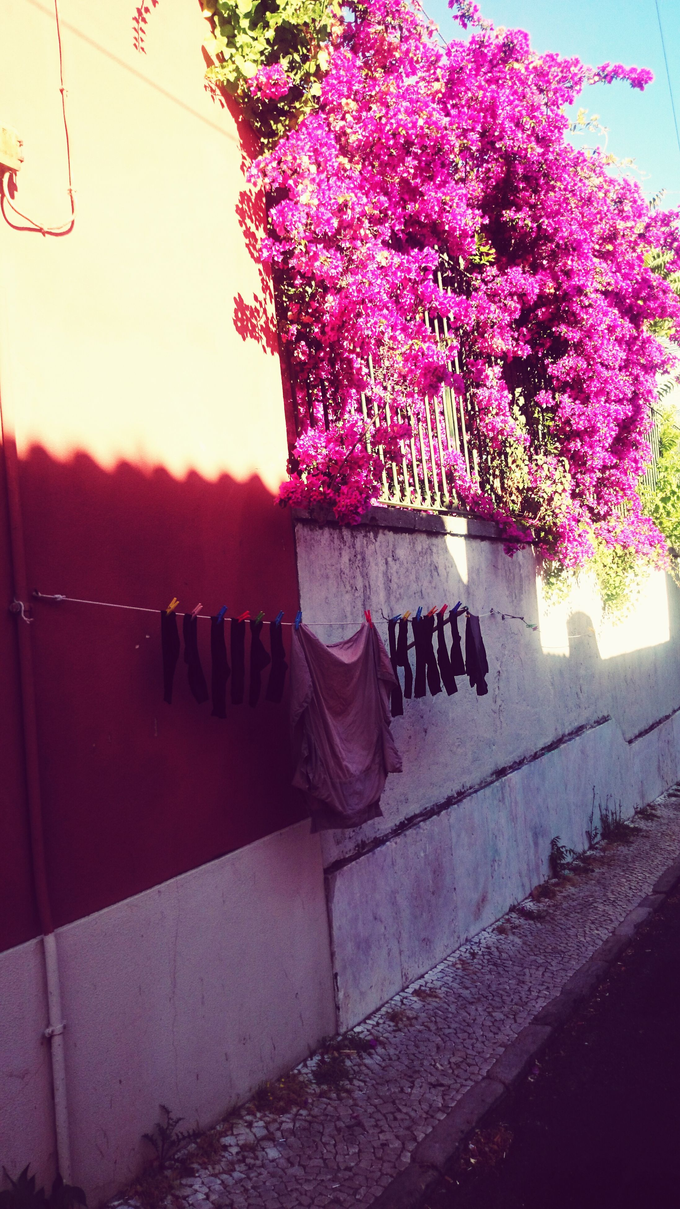 flower, pink color, growth, plant, wall - building feature, text, sunlight, no people, built structure, day, nature, tree, potted plant, outdoors, architecture, building exterior, decoration, close-up, fragility, western script