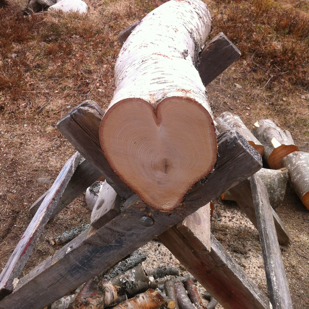 Hugging A Tree Love Nature_collection IPhone Only