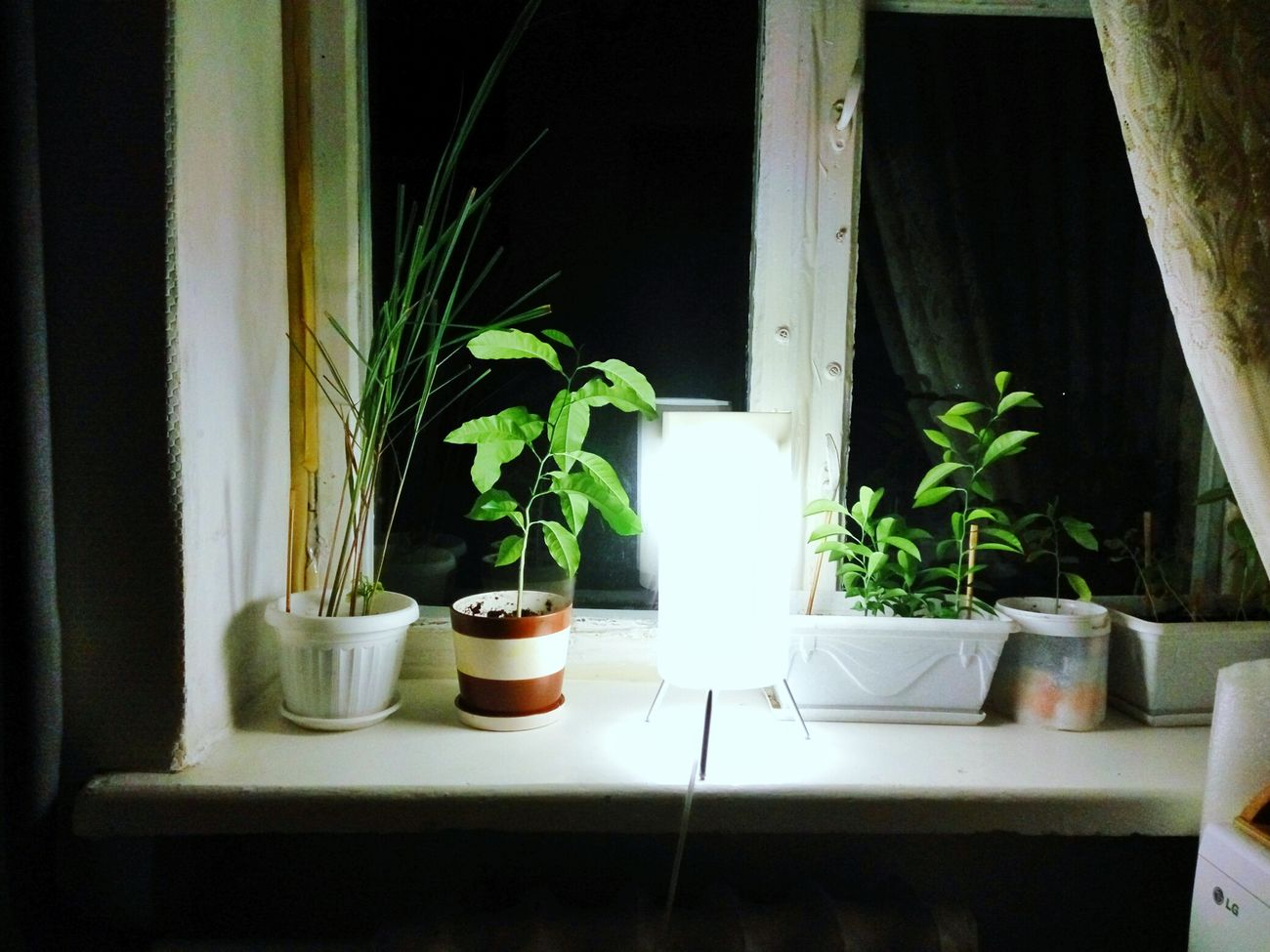 Night view near my window witb handmade lamp. Indoors  Table Plant Growth Flower Freshness Ukraine Fruits Plant Plants Growing Nature Natural BeautyFresh On Eyeem  Vegetarian Food Fresh On Eyeem  Growing Food Nobody Leaves Simplicity Interior Views Interior Style Lights