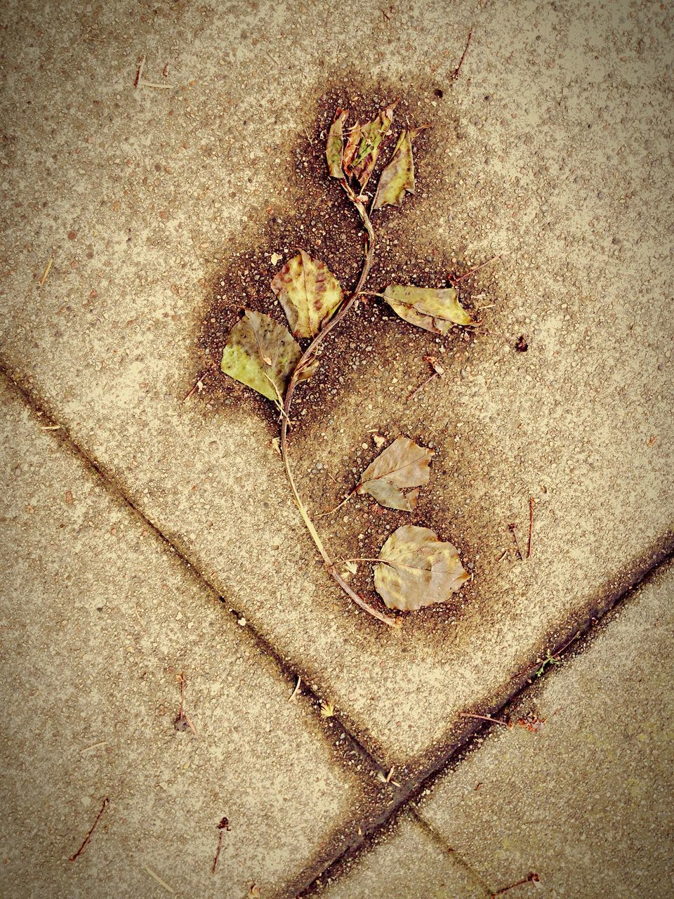 leaf, high angle view, dry, sand, no people, nature, autumn, outdoors, day, fragility, close-up, beach, maple