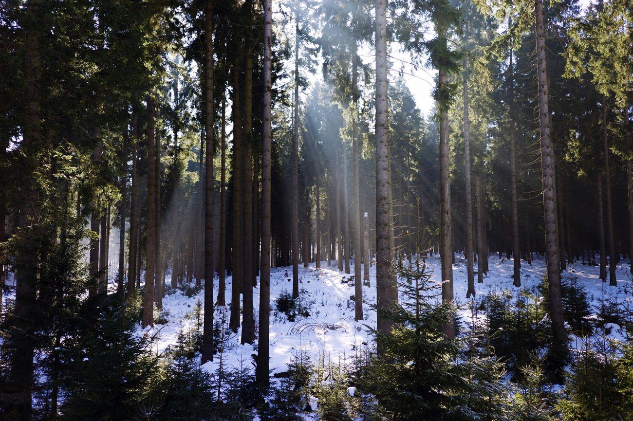 Tree Nature Sky Snow Sun Sunshine Leica Leicam Leicam9p M9p Rangefinder CarlZeiss Biogon 35mm First Eyeem Photo