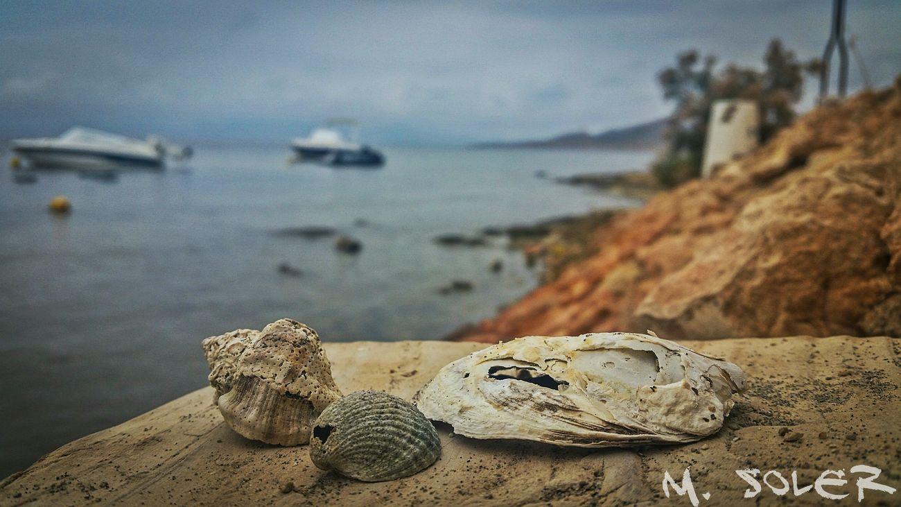 Shells Shell Beach Sea Mar Marmenor Murcia SPAIN Lamanga Lamangadelmarmenor Conchitas Conchas Marinas Conchas Barcos Ships Yachts España