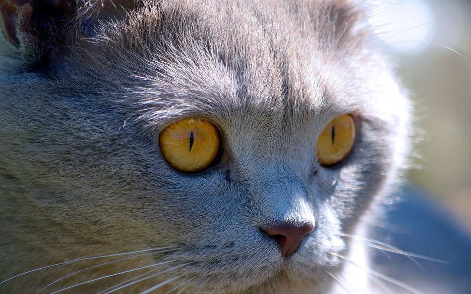 Beautiful stock photos of eyes, Animal Eye, Animal Themes, Cat, Close-Up