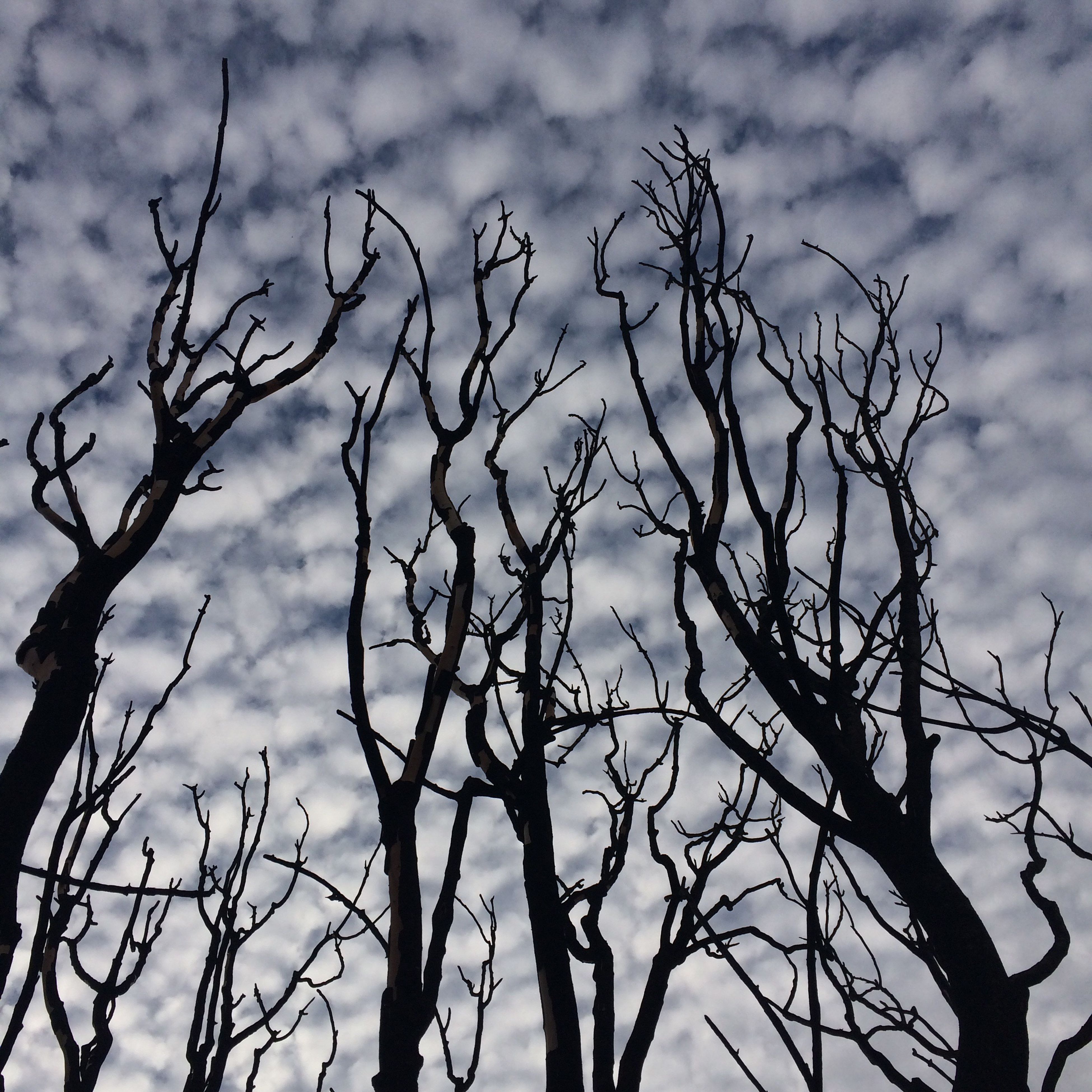 sky, cloud - sky, low angle view, nature, no people, bare tree, outdoors, day, beauty in nature, tree, close-up