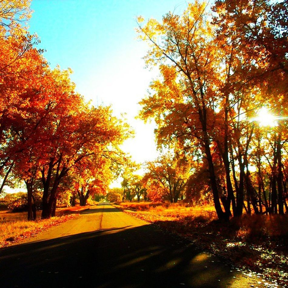 What a gorgeous Autumn day here in Colorado today! Denver Cowx travel droidography