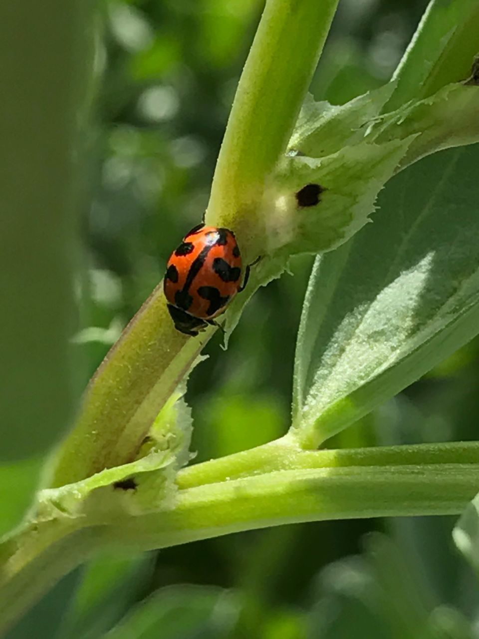 ladybug, insect, animals in the wild, animal themes, green color, leaf, close-up, plant, one animal, red, nature, day, outdoors, growth, no people, tiny, fragility, flower, beauty in nature