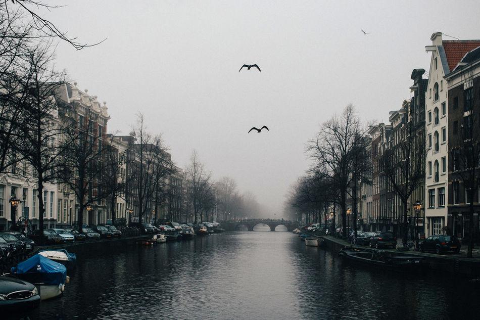 Beautiful stock photos of tiere, Amsterdam, Netherlands, Travel Destinations, animal Themes