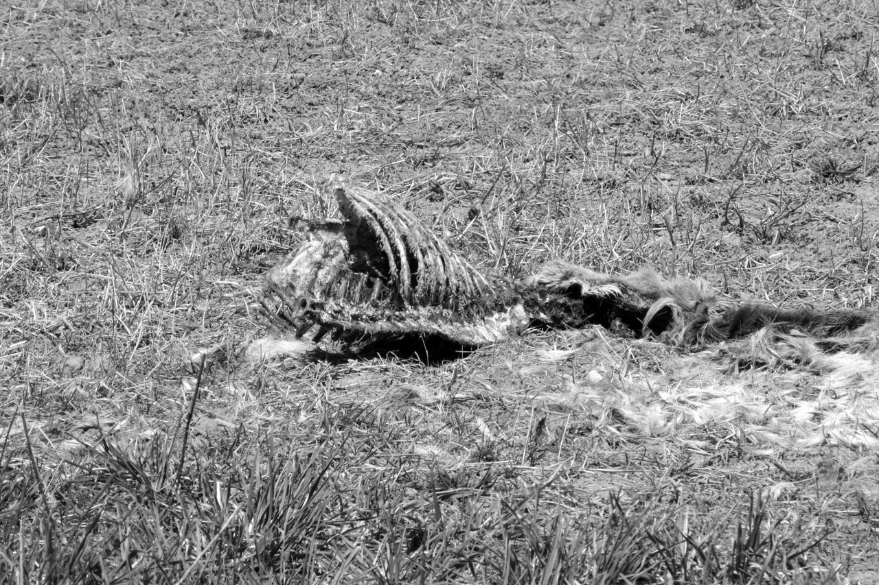 Animal Skeleton On Field During Sunny Day