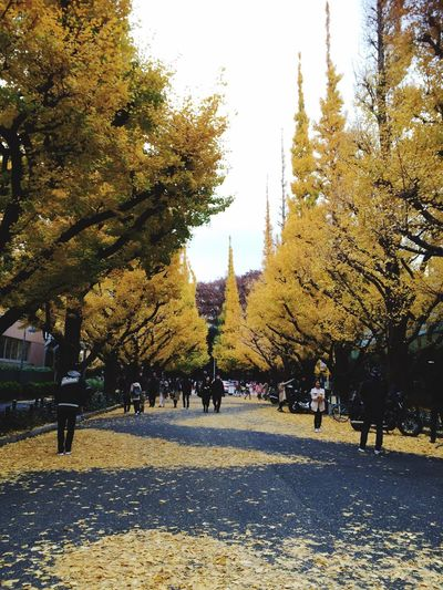 Tree Real People Outdoors Nature Day The Way Forward Building Exterior Sky Men Beauty In Nature People Architecture Adult Adults Only Ginkgo 11/26, 2016⛅️ Tokyo の紅葉は見頃です🍂