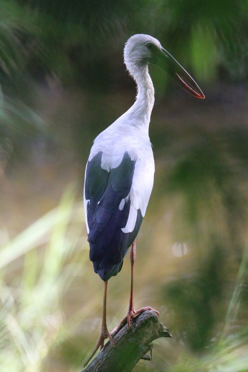 bird, animal themes, animals in the wild, one animal, day, nature, outdoors, animal wildlife, heron, perching, no people, water, beak, beauty in nature, gray heron, close-up
