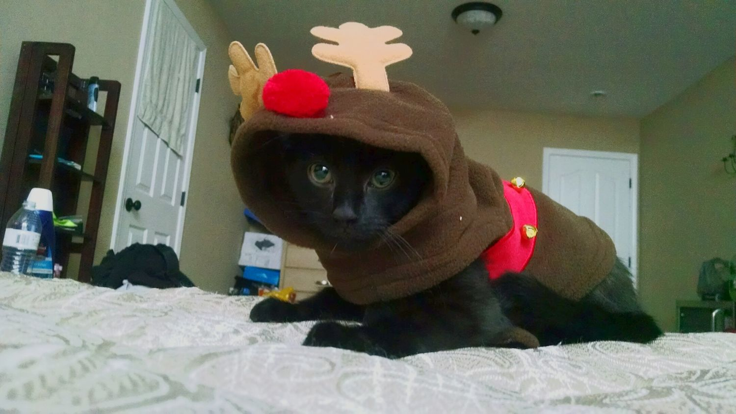 My Winter Favorites Cat Christmas Outfit Embarrassing Love Blackisbeautiful Greeneyes i love you jynx my sweet baby First Eyeem Photo