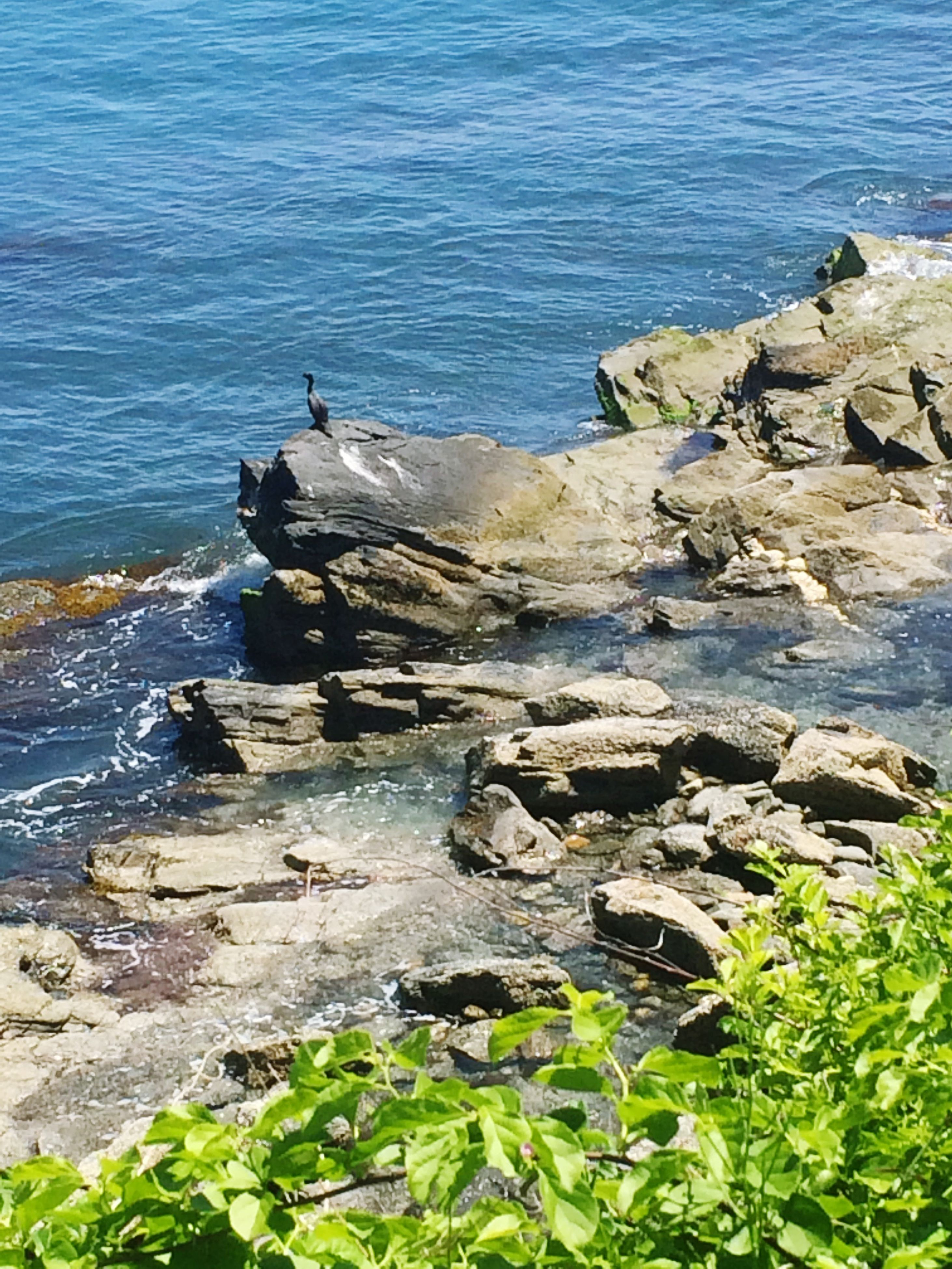 water, sea, rock - object, tranquility, tranquil scene, scenics, beauty in nature, nature, rock, rock formation, shore, high angle view, idyllic, stone, coastline, plant, horizon over water, beach, day, blue