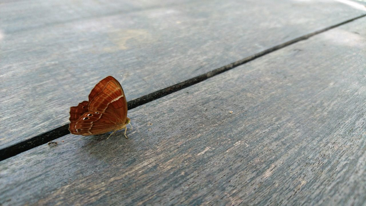 Beautiful stock photos of schmetterling, wood - material, no people, high angle view, close-up