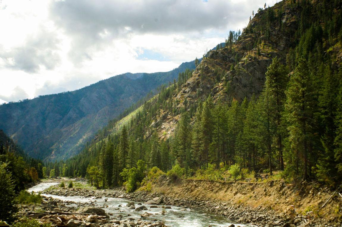 Mountain stream Beauty In Nature Cloud - Sky Flowing Stream Landscape Mountain Mountain Range Nature Pines Rocky Stream Scenics Sky Stream Water Adventure Wilderness