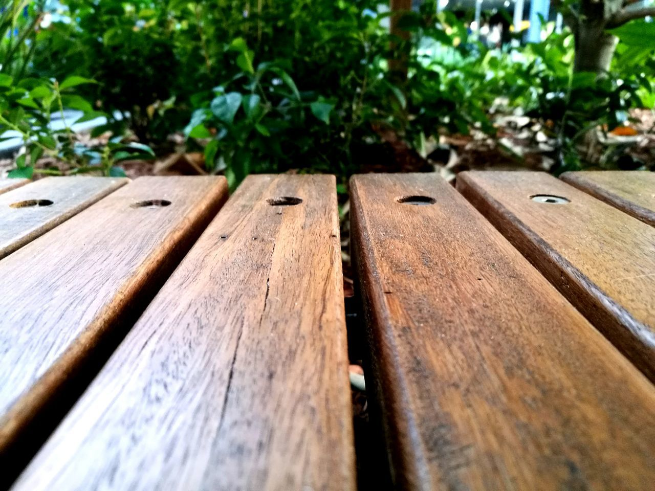 Daydreaming Plants 🌱 Flower Growth Tranquility Green Color Day Plant Flowers Beautifulinnature Naturalbeauty Beautiful No People Low Angle View Tree Tumblr Horizontal Freshness Close-up Wood Wood - Material Wood