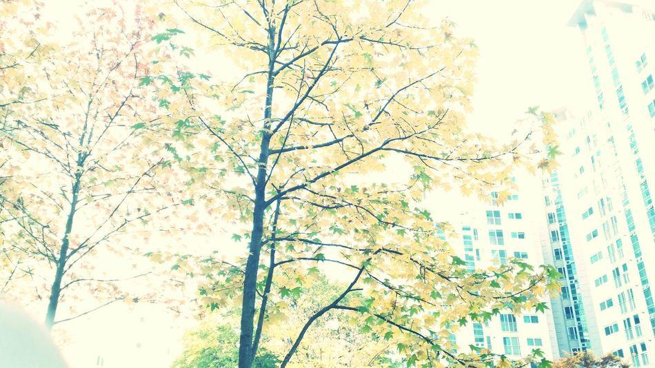 분명,가을을 봤다.