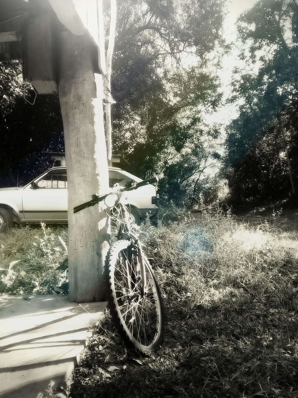 transportation, bicycle, tree, mode of transport, wheel, land vehicle, day, outdoors, no people, tire, stationary, grass, nature, close-up, sky