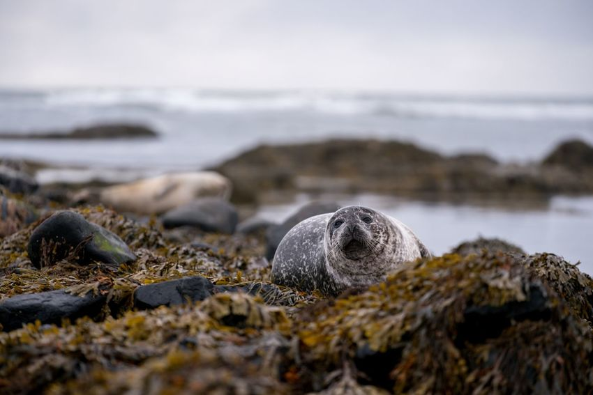 Animal Themes Animals In The Wild Beach Beauty In Nature Close-up Day Mammal Nature No People Outdoors Rock - Object Sea Water EyeEm Ready   EyeEmNewHere