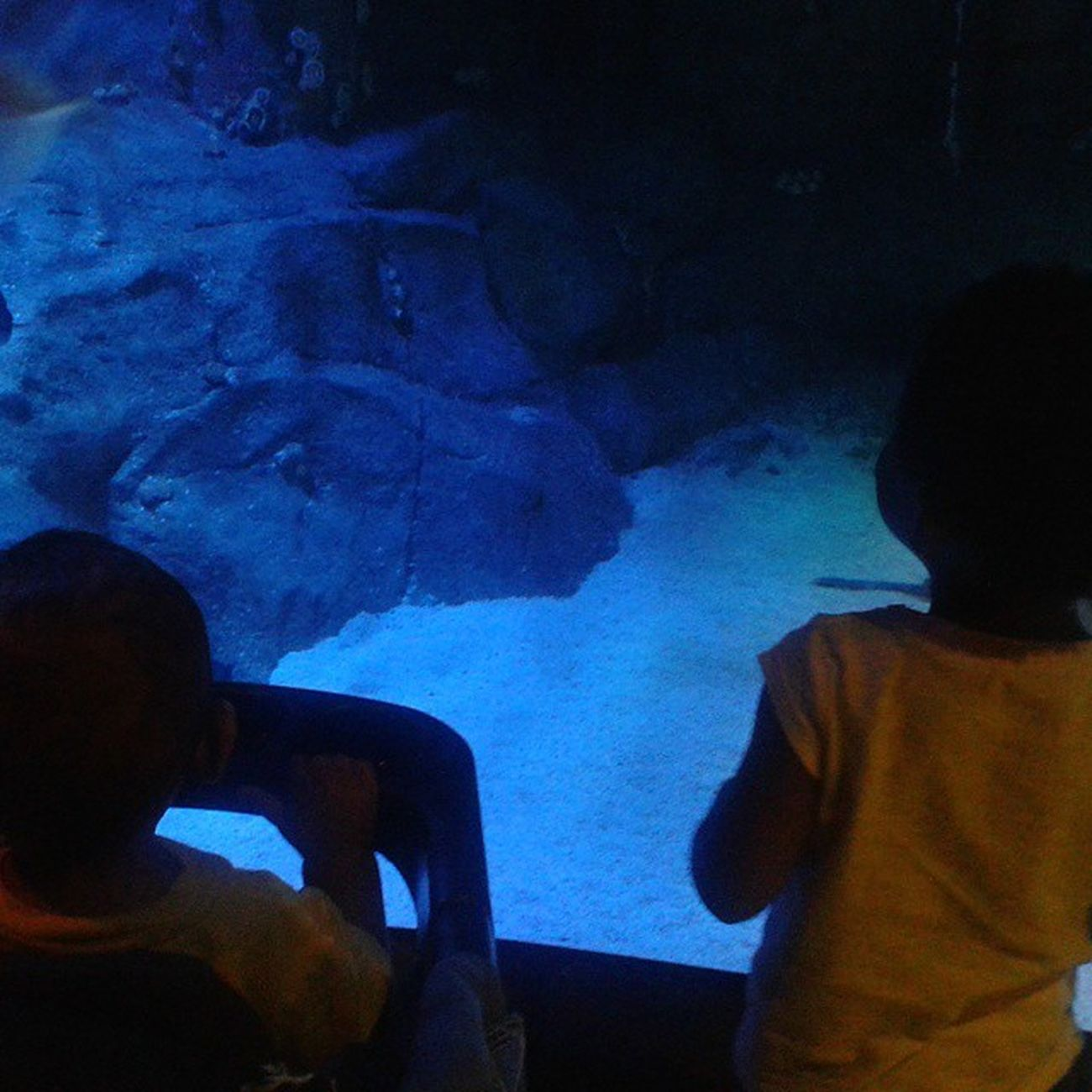 Took the Brats to GrapevineSeaLife today... I am so blessed to be able to spend my days watching them grow and explore... Seeing them get excited about Godscreations helps me to appreciate Myblessings that much more!!! 😍 SAHMLife Fieldtrip Aquarium WeLoveTheSea AnxiousForDestin