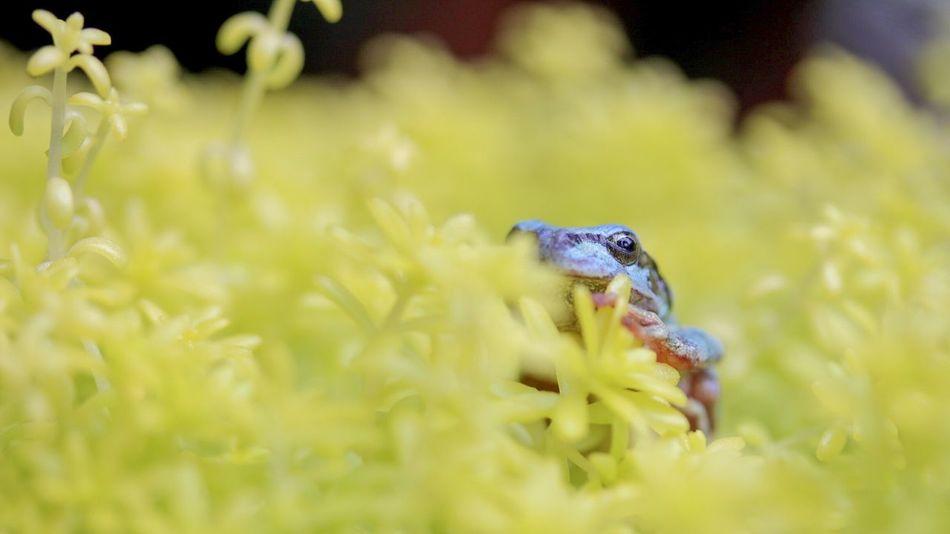 Beautiful stock photos of macro, Amphibian, Animal, Animal Body Part, Animal Head