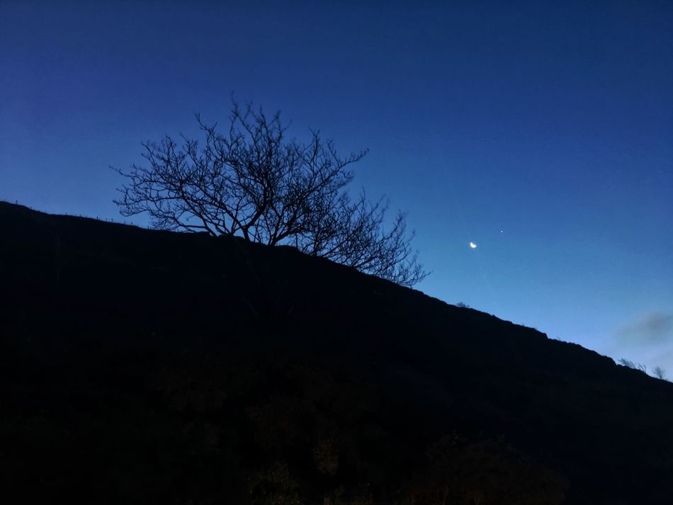 Silhouette Blue Nature Low Angle View Bare Tree Sky Beauty In Nature No People Clear Sky Outdoors Tree Moon Scenics Branch Mountain Night Astronomy Wales Iphone6splus IPhoneography by @jg.photography.official