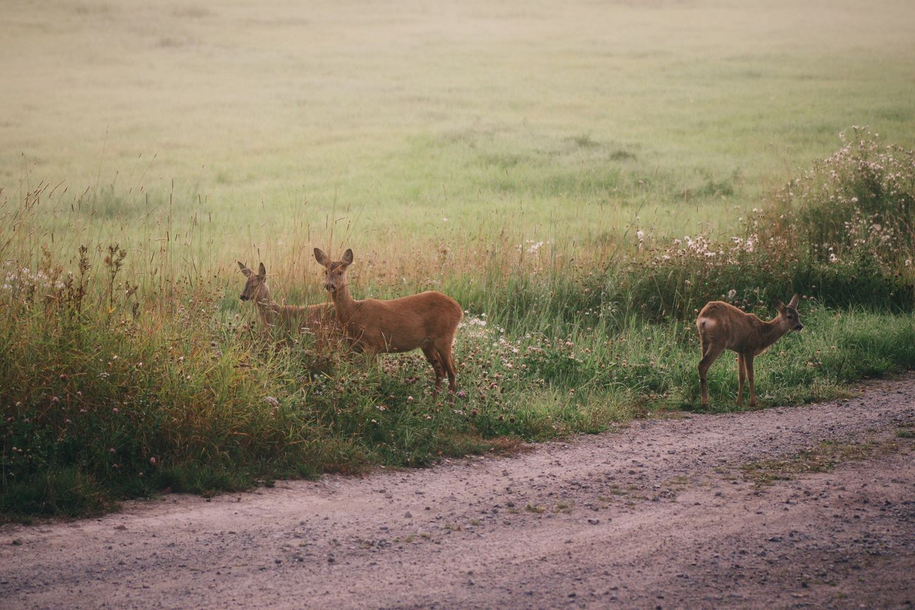 A beautiful morning moment Pentax K-3 Roe Deer Morning Light Nature