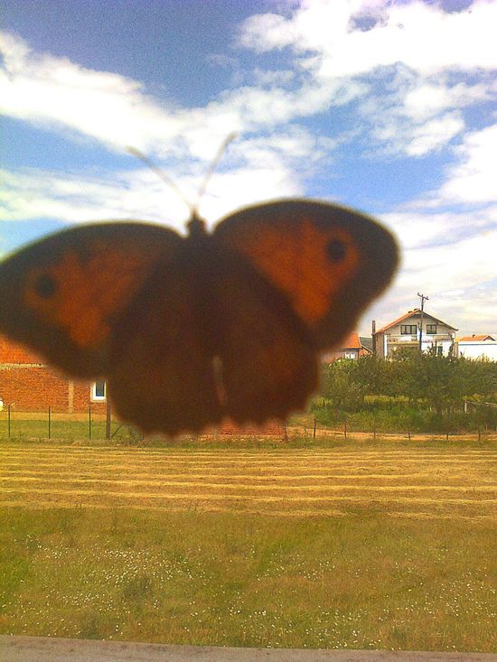 Capture The Moment Buterfly Beautiful Buterfly Magical View Check This Out Something Beautiful Catch The Moment Something Special Fleetingmoment