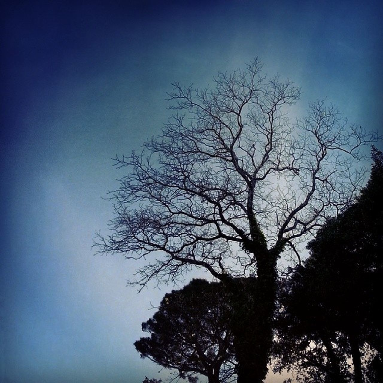 tree, silhouette, nature, beauty in nature, branch, sky, bare tree, no people, outdoors, day