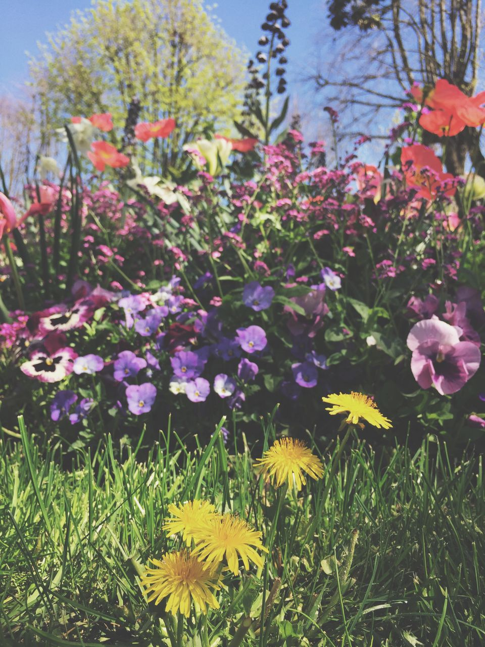Flowers Blooming On Grassy Field During Sunny Day