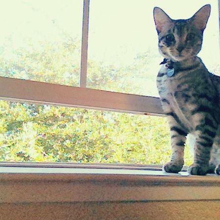 Good Morning on This Beautiful Sunday! SundayMornings Monalisa Cats Beautiful