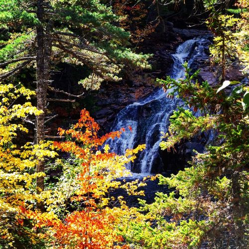 Be. Ready. Waterfall Nature Tree Forest Beauty In Nature Tranquil Scene Scenics No People Flora Tranquility Outdoors Growth Day Water Hiking Seeing The Beauty In Life Finding Secret Passageways