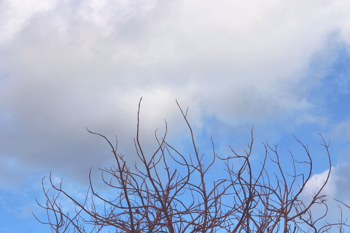 Clounds And Sky Cloundy Dried Branches Dried Tree Against Cloudy Sky Beauty In Nature No People Weather Lopburi Location Hometown Countryside Topofthetree Thailand
