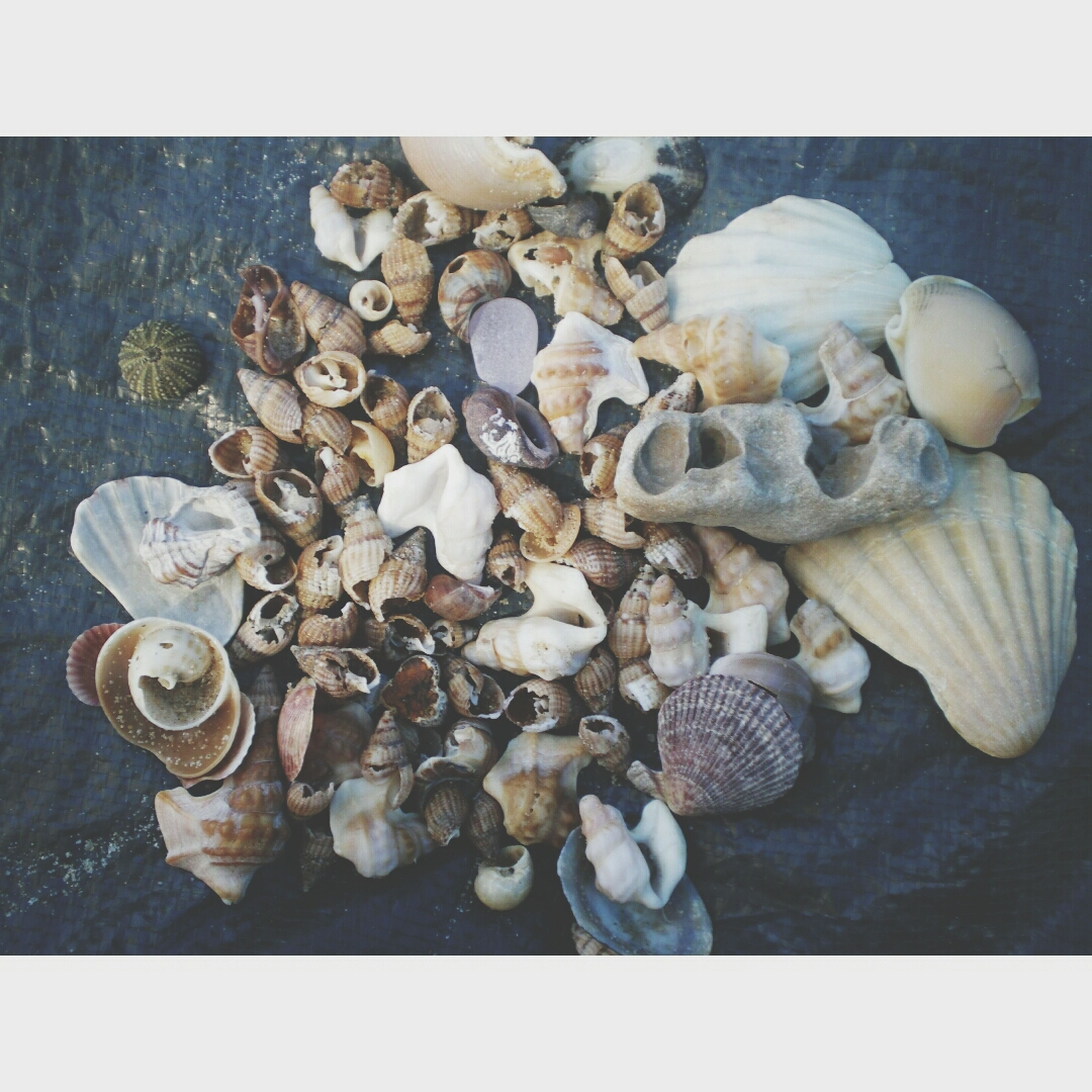 transfer print, auto post production filter, high angle view, large group of objects, pebble, seashell, abundance, close-up, still life, nature, stone - object, day, stack, no people, outdoors, shell, food and drink, wood - material, group of objects, beach