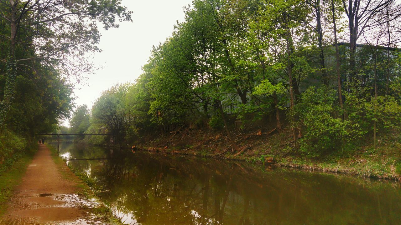 tree, water, reflection, nature, tranquility, river, tranquil scene, forest, outdoors, no people, beauty in nature, day, growth, scenics, sky