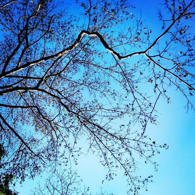 Hello World OpenEdit GREEN LIFE Trees Light Sun Light Changing The World Justenjoy Nature Life