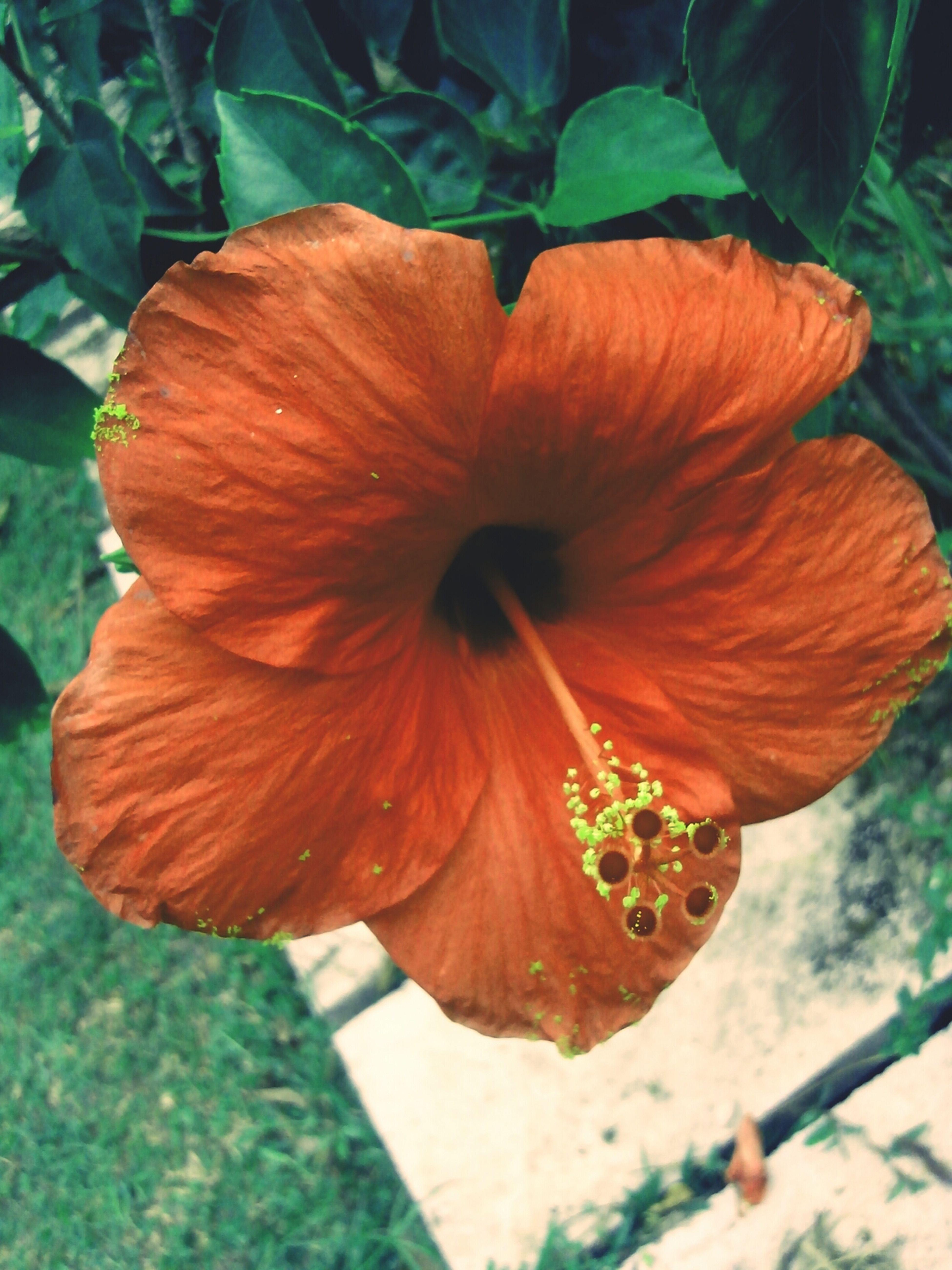 Beauty Red Flower