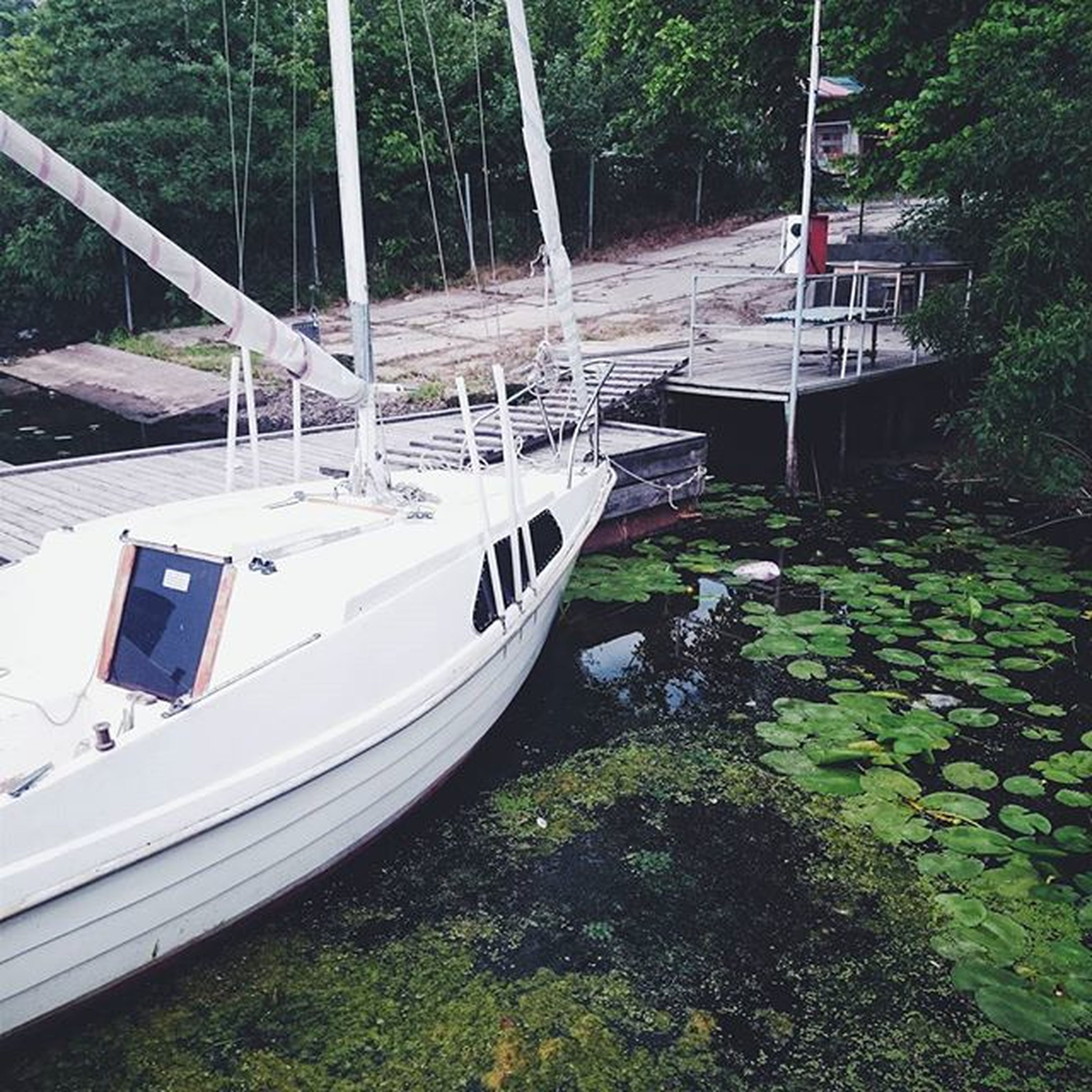 transportation, nautical vessel, boat, tree, mode of transport, water, moored, river, forest, nature, day, plant, high angle view, no people, growth, outdoors, lake, railing, travel, green color