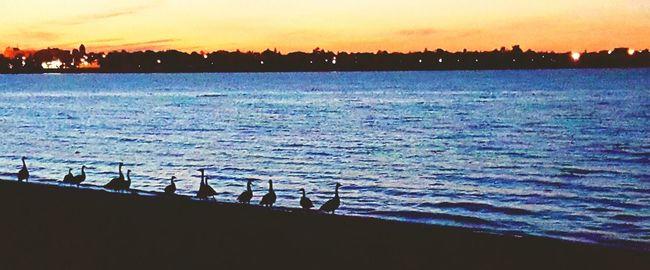 Creative Light And Shadow Surroundedbynature Lakeside Eve