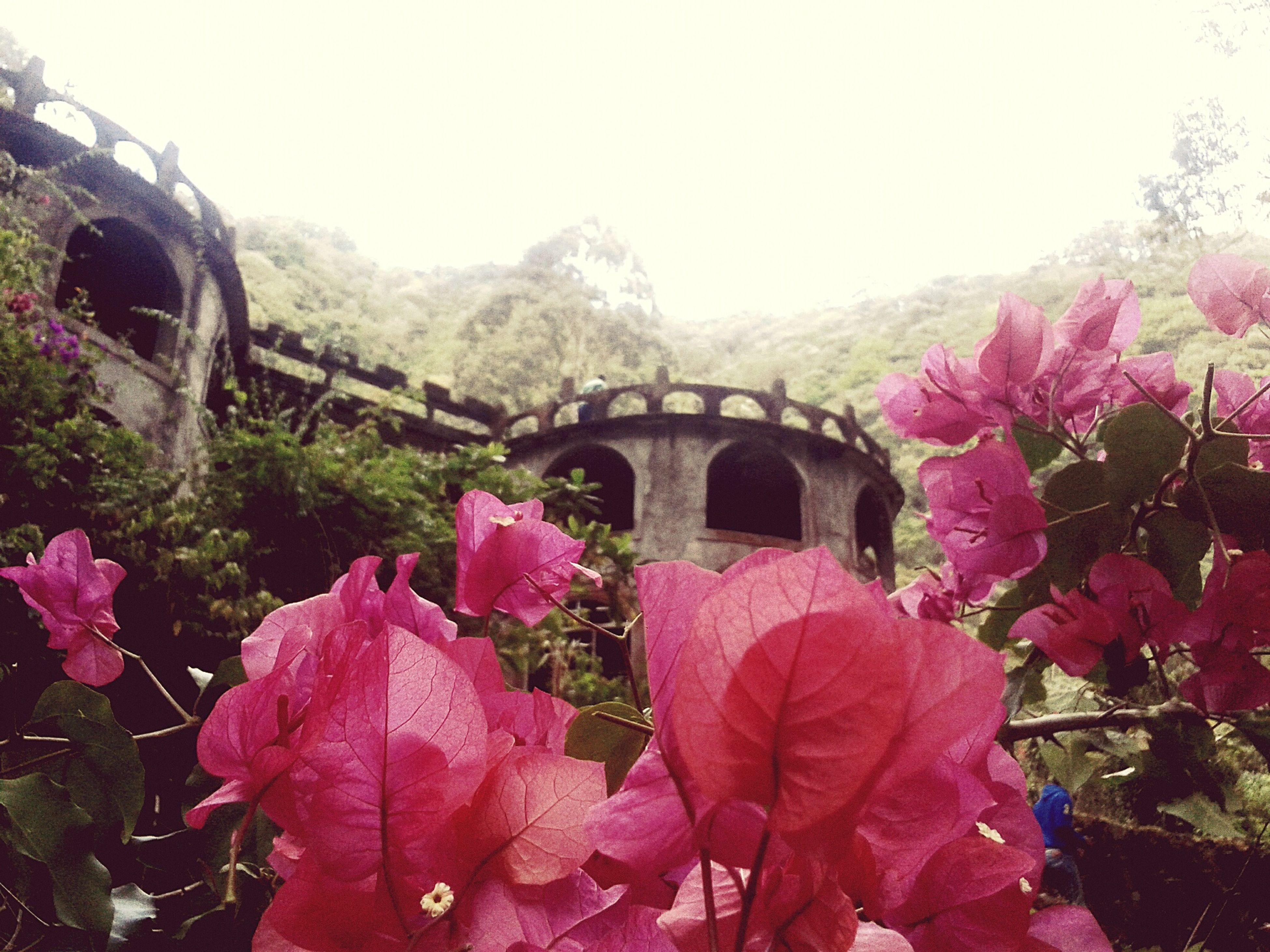 Y allí entre montañas verdes y coloridas flores, un castillo ha quedado abandonado. La princesa y su amado se han alejado en su caballo... Castle Panamaoutdoors Nature EyeEm Nature Lover