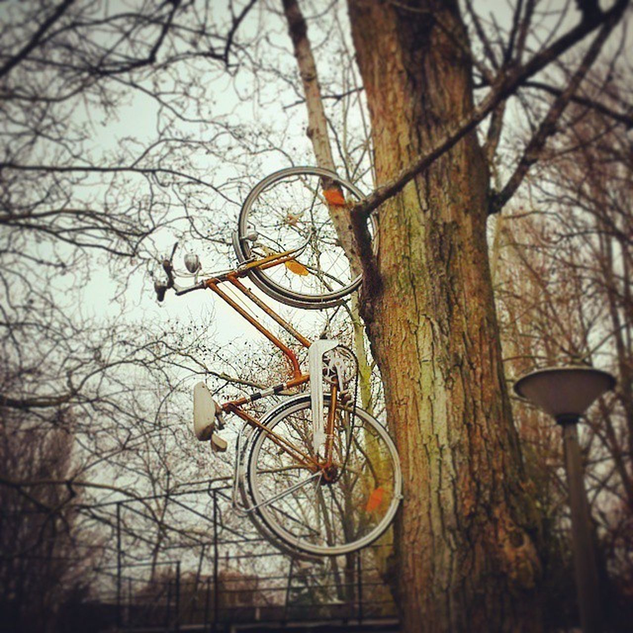 Bike the rules! Bike On The Tree Winter Nature Obuda Római Kétrombusz Vintage Goldenage Bikewaytoheaven BeHereNow