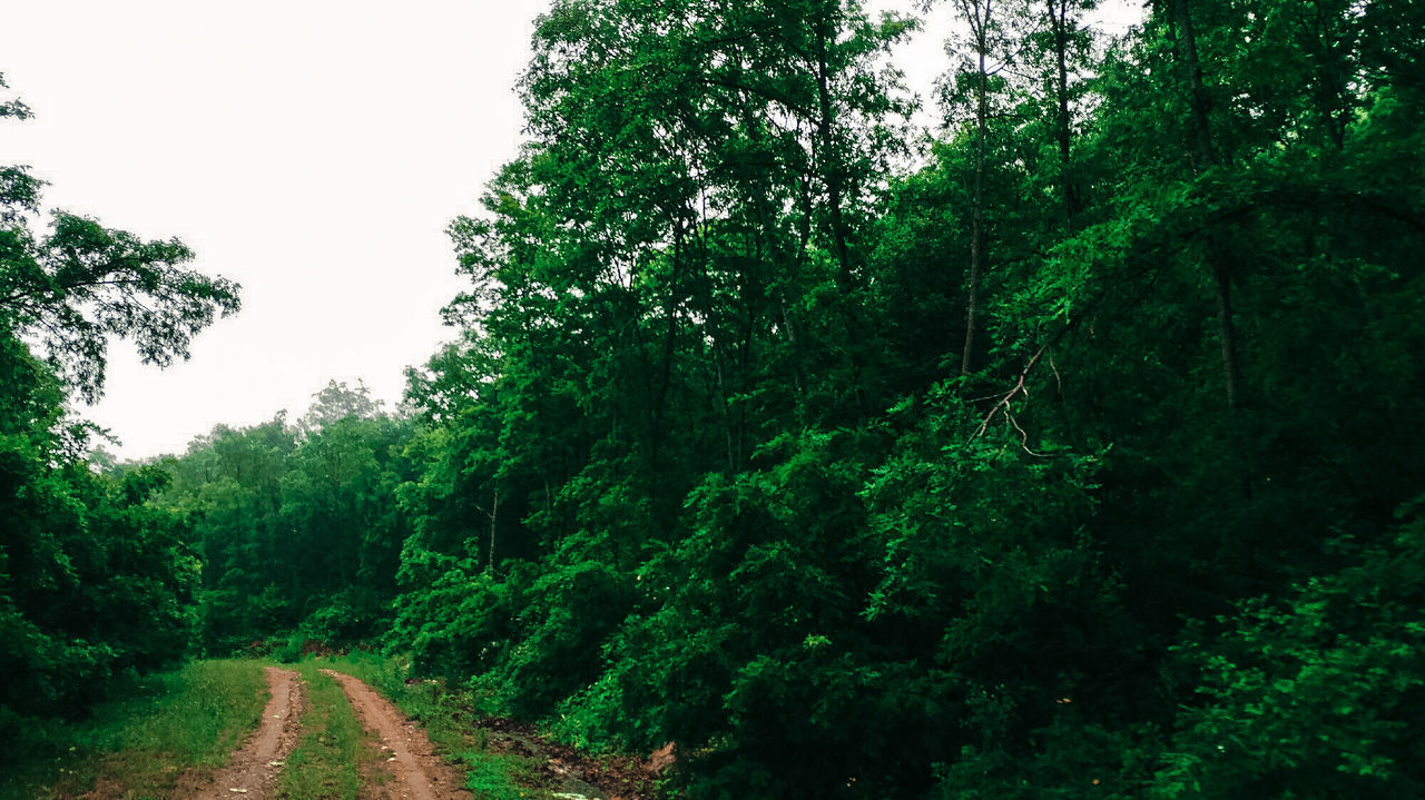 Unknow Road.. Tree Lush Foliage Forest Nature Outdoors Green Color Freshness Leaf No People Beauty In Nature Unknown Road Road To Nowhere Tree Area Landscape Perfect Niceshots Paradise Wild Nofilter Dark Jungle Camping Freedom Clouds And Sky
