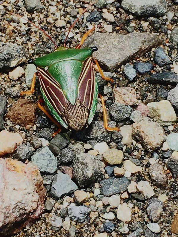 TakeoverContrast Quien tiene esta ? ;D En Bogotá Colombia Insect Photography QueBonito Fauna Escarabajo Beetle