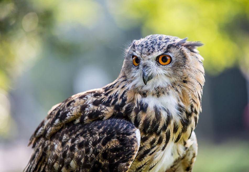 Beautiful stock photos of porträt,  Animal Eye,  Animal Themes,  Animal Wildlife,  Animals In The Wild