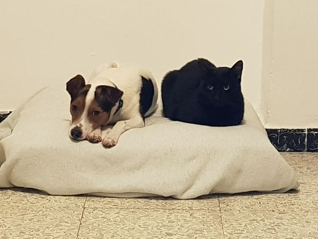 Mi Nano y mi Negri Perro Perros  Perros❤ Perros Por El Mundo Perros&gatos Gato Gatos Gatos Gatos 😍 GatosFelices Gatos😻 Gatosfelizes Gatosnegros Gatos Felizes Gatos Comodos Pets Animal Domestic Animals Dog Mammal One Animal Indoors  Animal Themes Lying Down No People Day Looking At Camera Shades Of Winter Business Stories An Eye For Travel EyeEmNewHere Love Yourself Colour Your Horizn