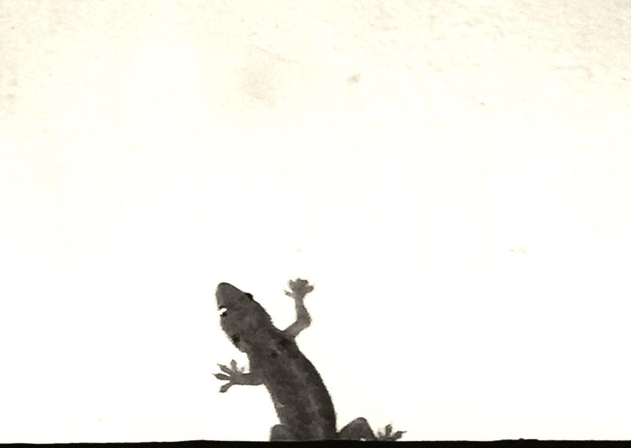 EyeEm Photo Of The Day Photography Picoftheday Iphonography Indoors  Eye4photography  Eyemphotography EyeEm Best Shots - Black + White Eyeem Market Eyem Gallery Eyeemindia Mobilography Low Angle View Lizard Lizard Nature Lizard Close Up
