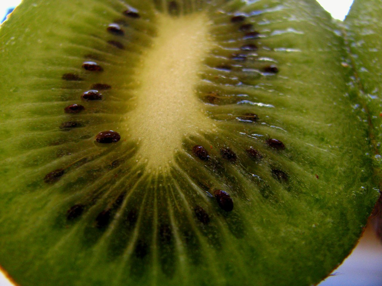Kiwi Kiwi - Fruit Kiwis Fruit Food And Drink Healthy Eating Freshness Close-up Food Green Color Backgrounds Nature Food Photography My World Of Food Macro Fine Art White Background Still Life Delicious Nutritious Dietfood Diet & Fitness Diet Green Green Fruit
