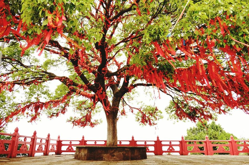 Tree Wish Tree Plants Temple Red Green Green Green!